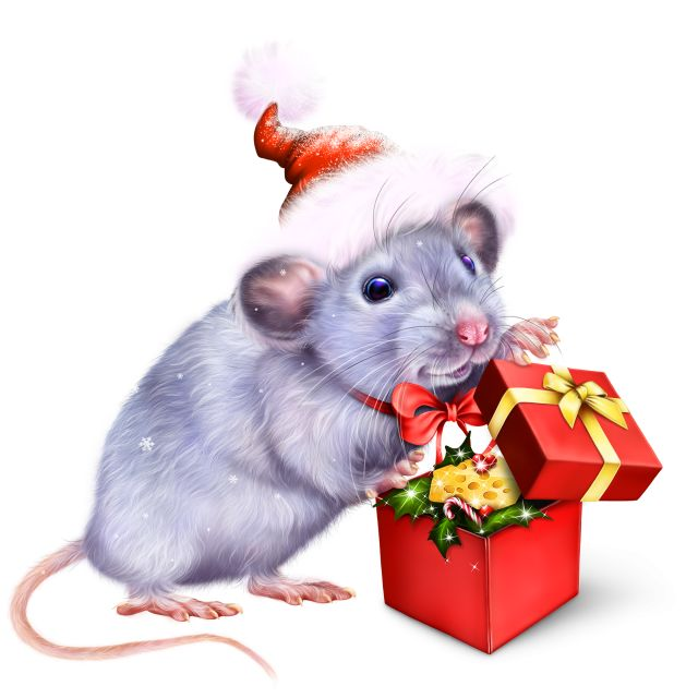 крыса фото 89