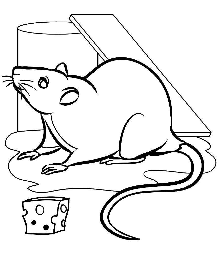 Раскраска крыса 7