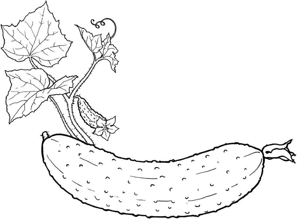 Раскраска огурец