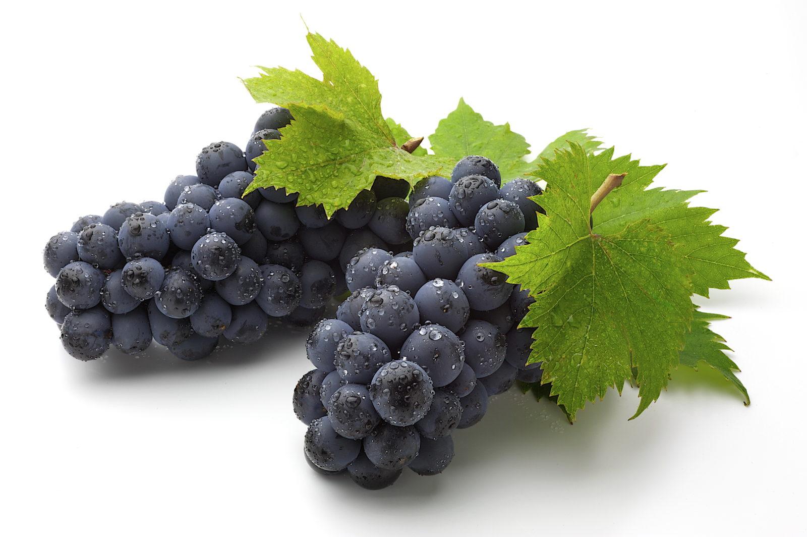 виноград фото 12