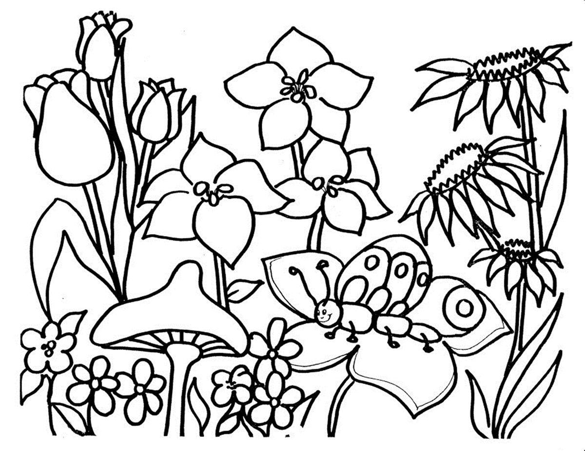 раскраска цветы летние