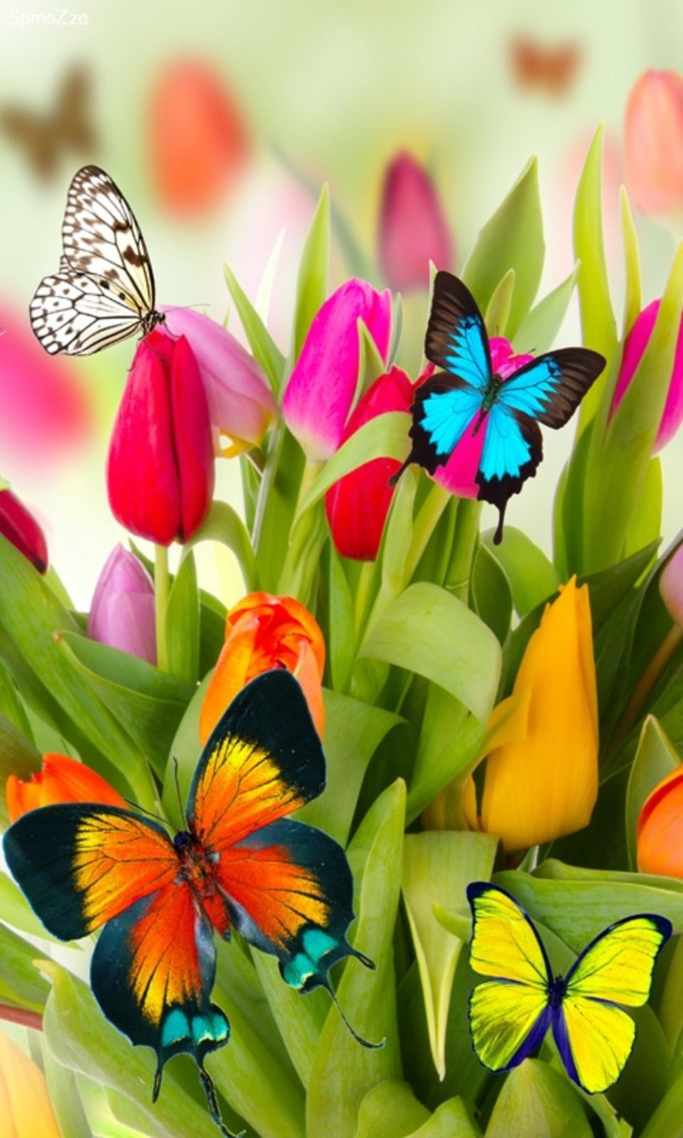 обои бабочки 12
