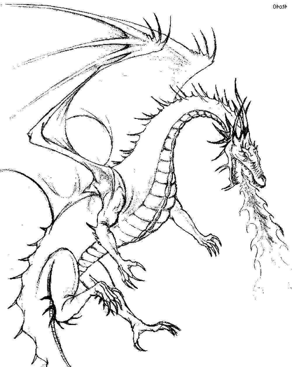 Раскраска дракон | andrey-eltsov.ru