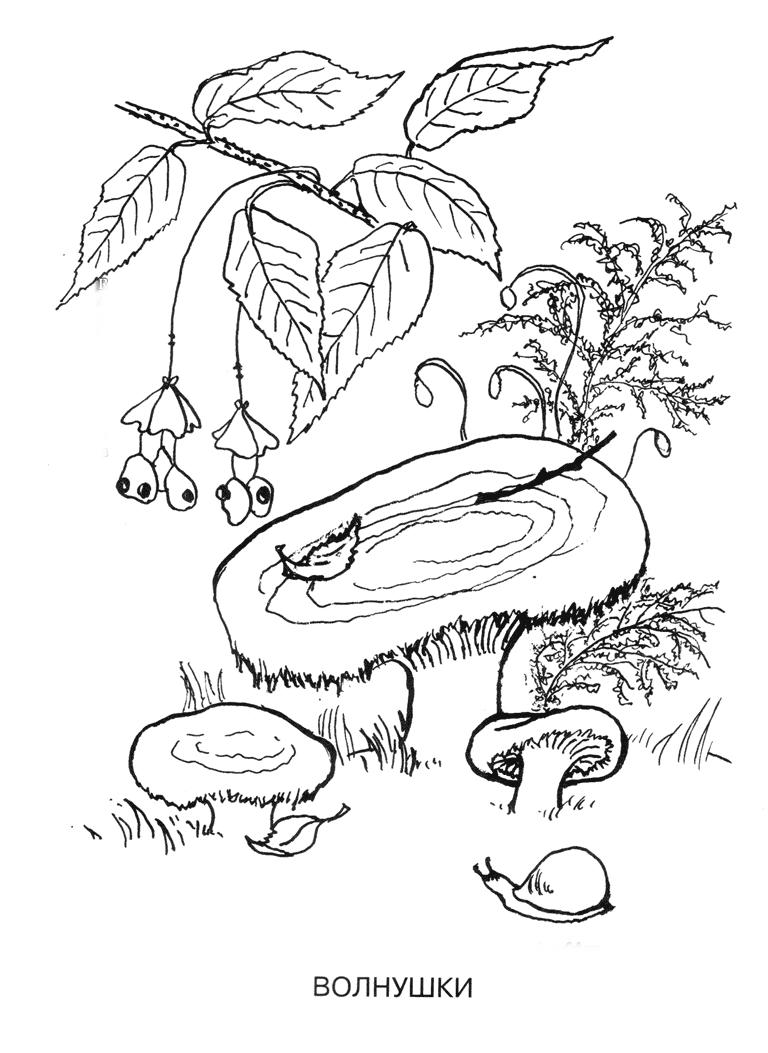 Картинки грибы   andrey-eltsov.ru