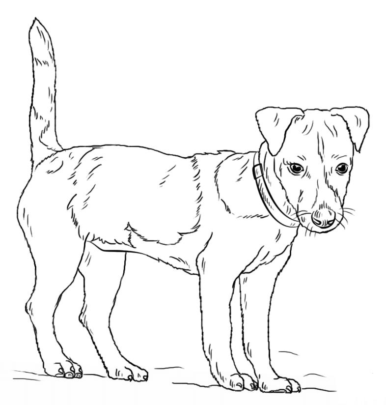 Раскраска собака | andrey-eltsov.ru