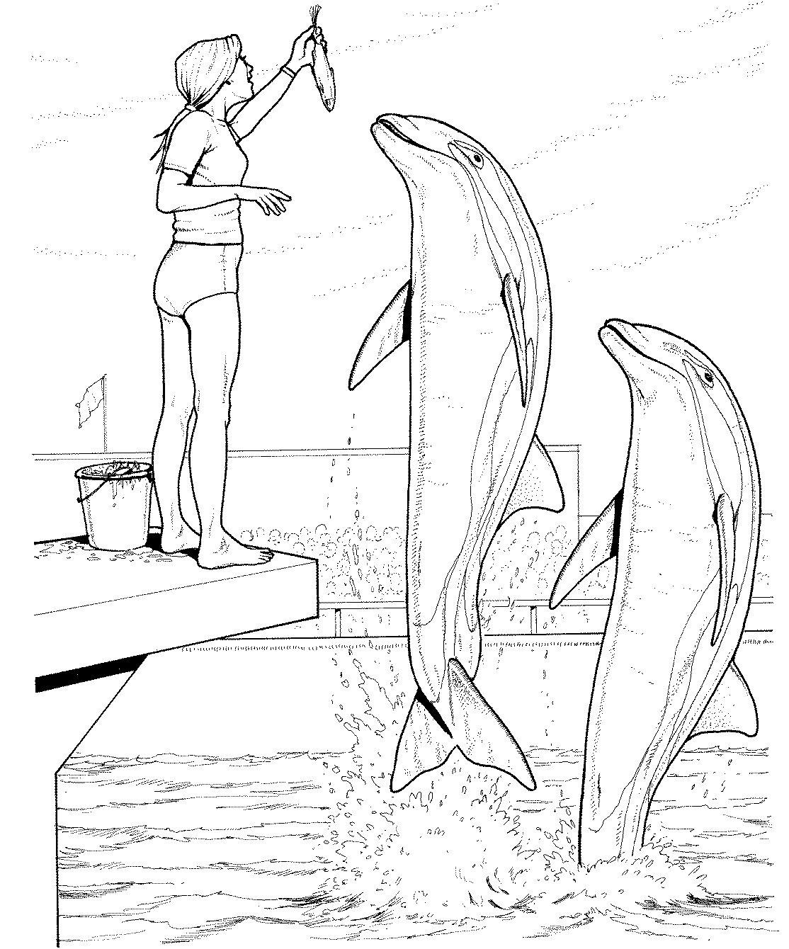 раскраска дельфины 4