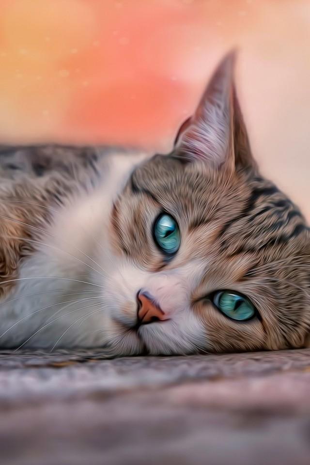грустный котёнок 3