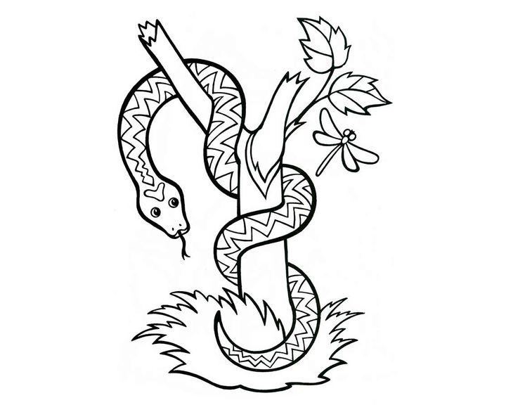 Раскраска змея