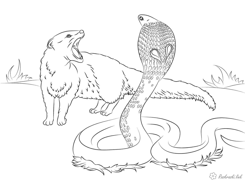 Раскраска змея 21