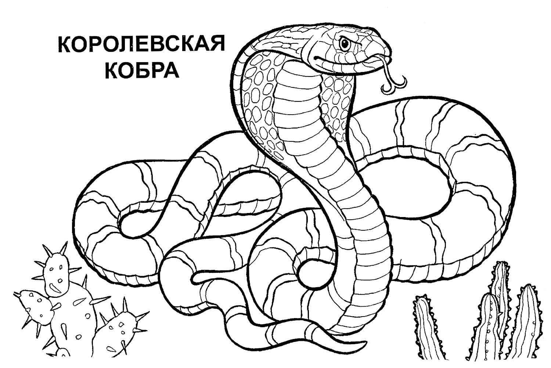 раскраска королевская кобра