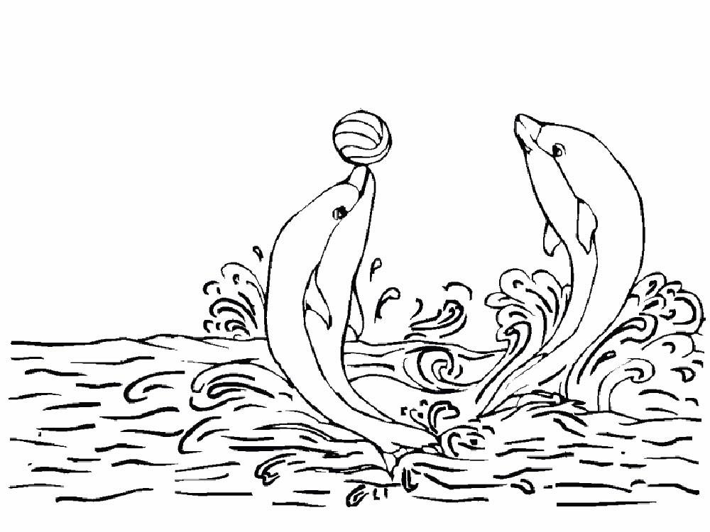 Раскраска дельфины 41