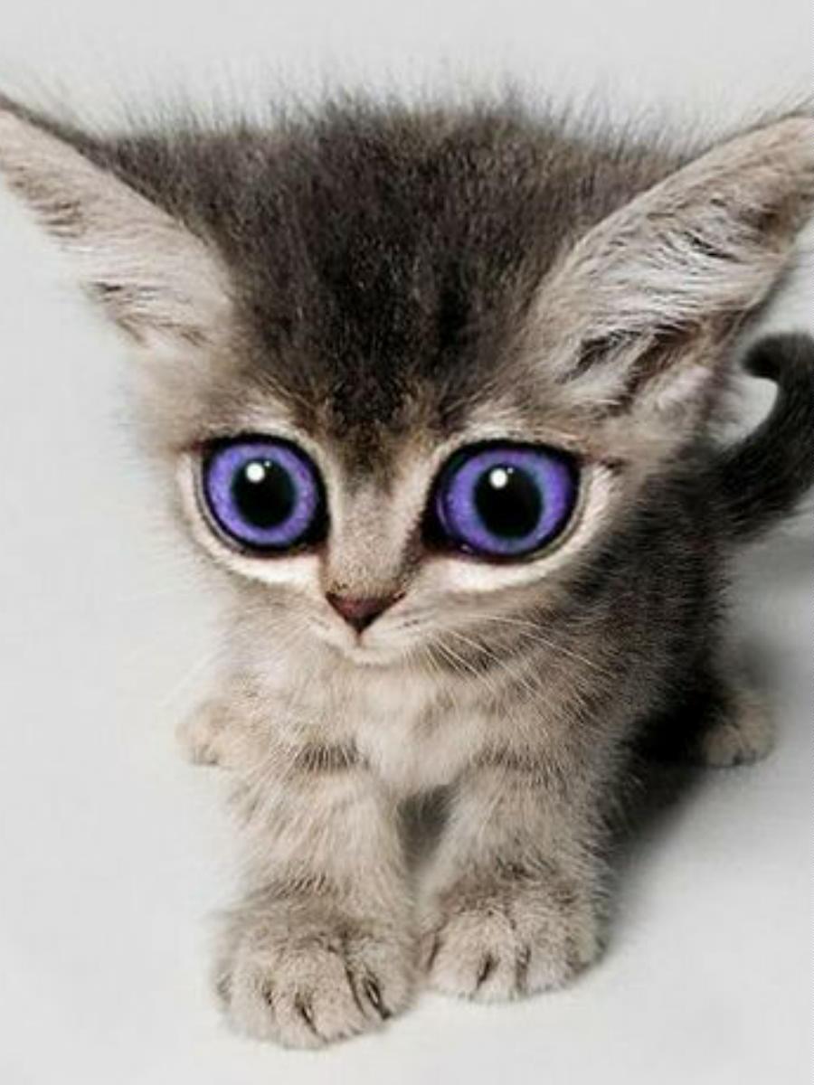 котёнок аниме