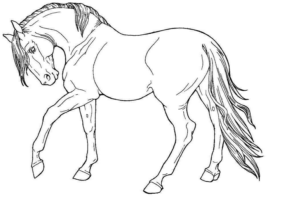 Раскраска лошадь 32