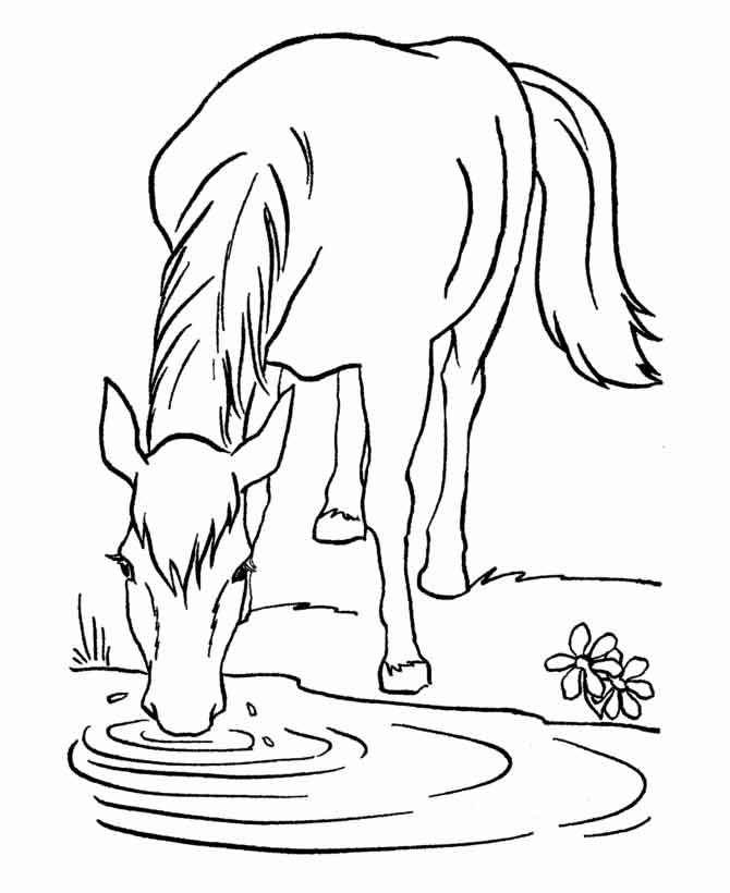 Раскраска лошадь 31