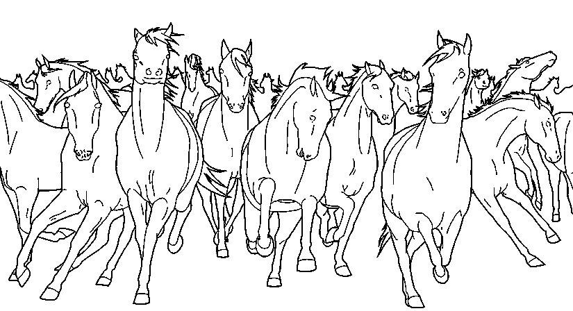 табун лошадей фото