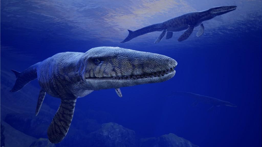 Мультяшные акулы картинки — kak.zydus.su