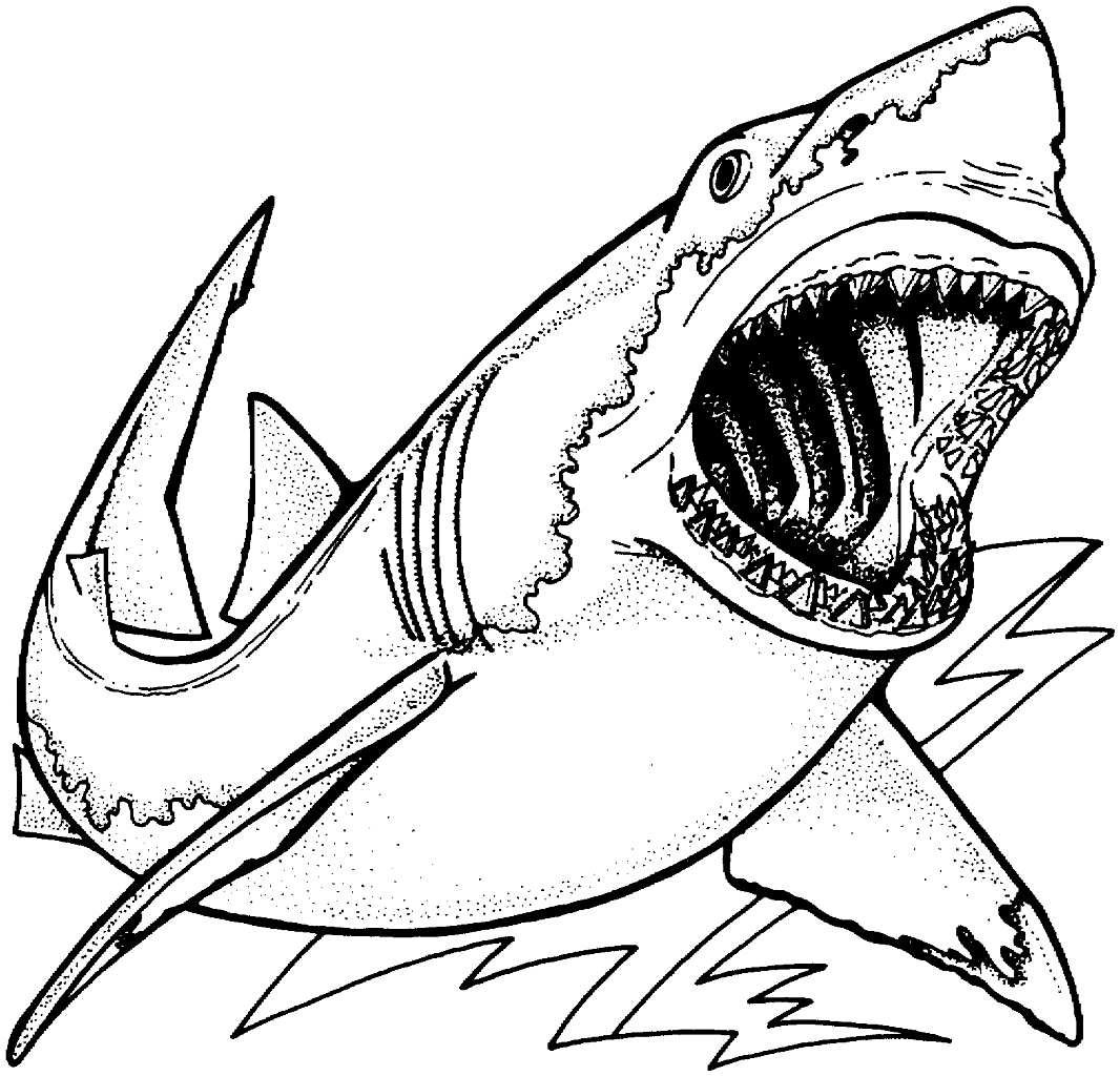 Картинки акула | andrey-eltsov.ru