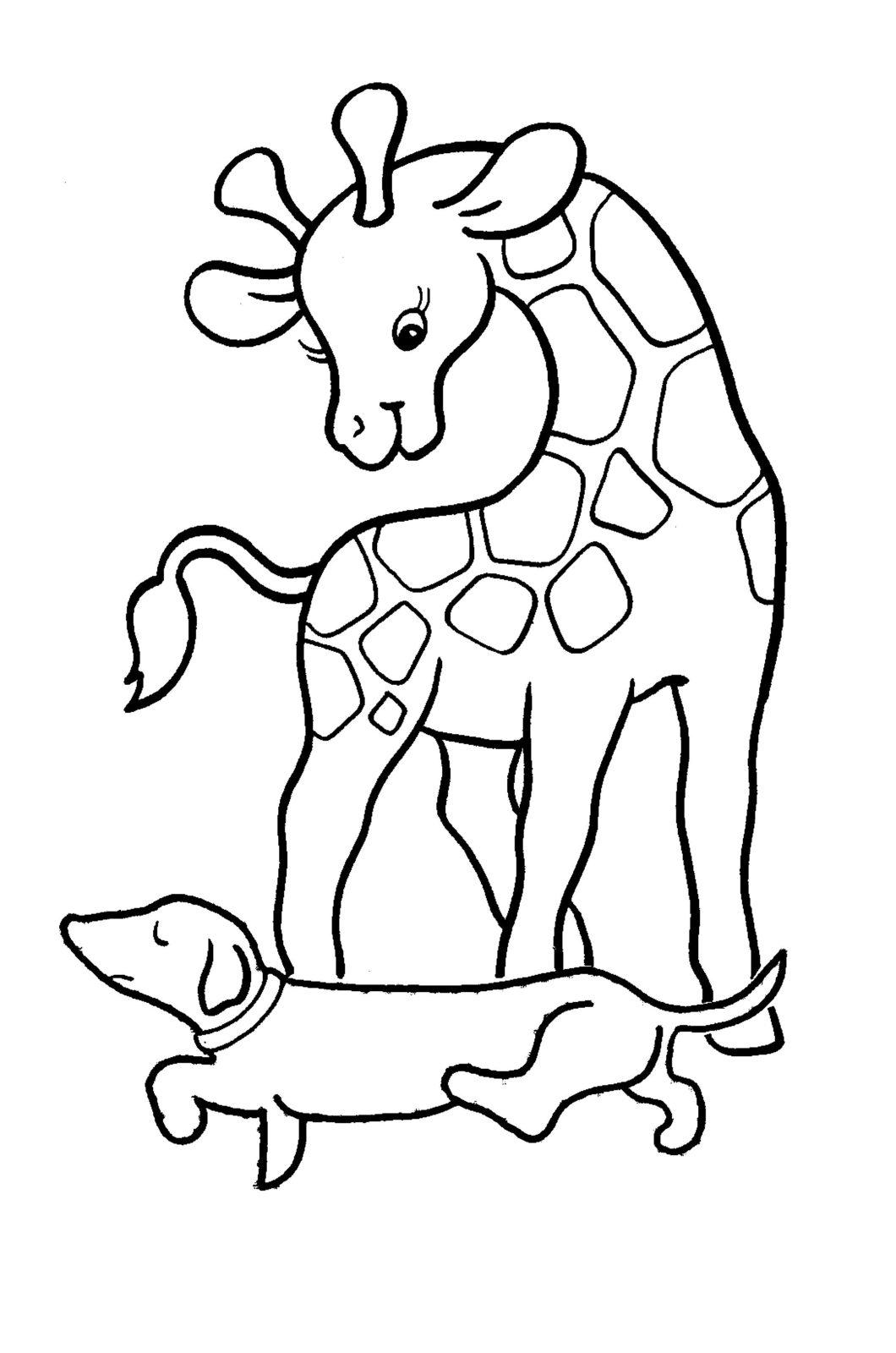 Раскраска жирафик 8