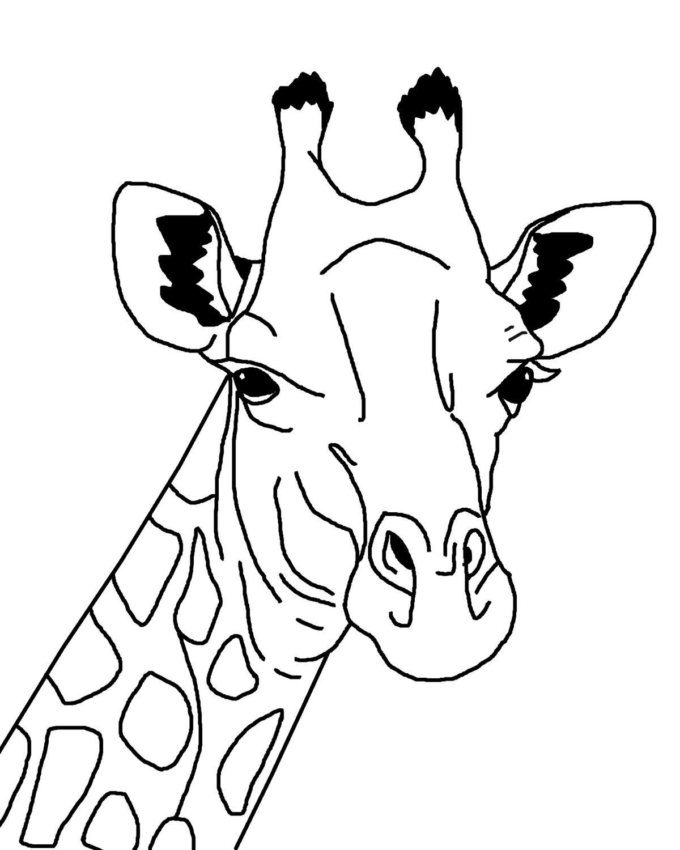 Морда жирафа 2