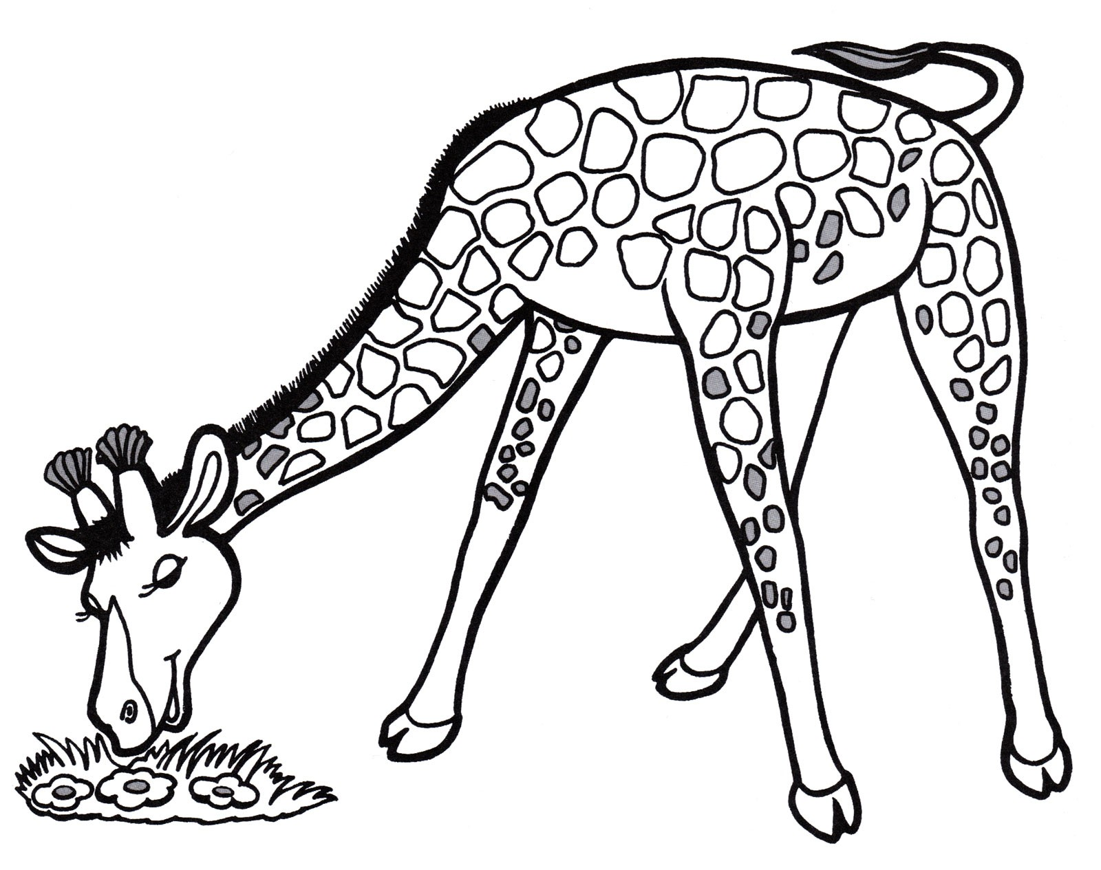 Раскраска жираф 29