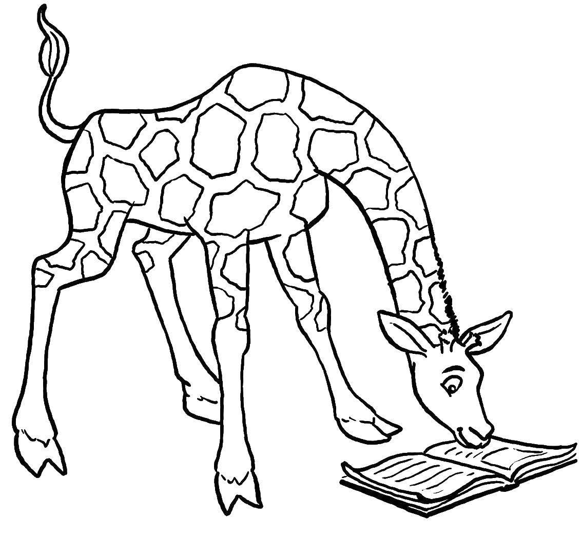 Раскраска жираф 31