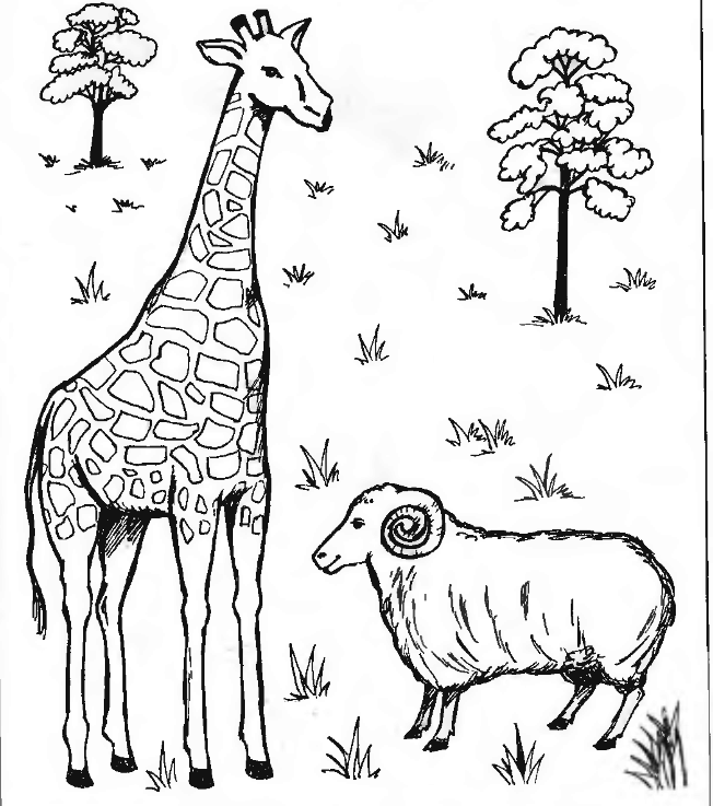 Раскраска жираф 19