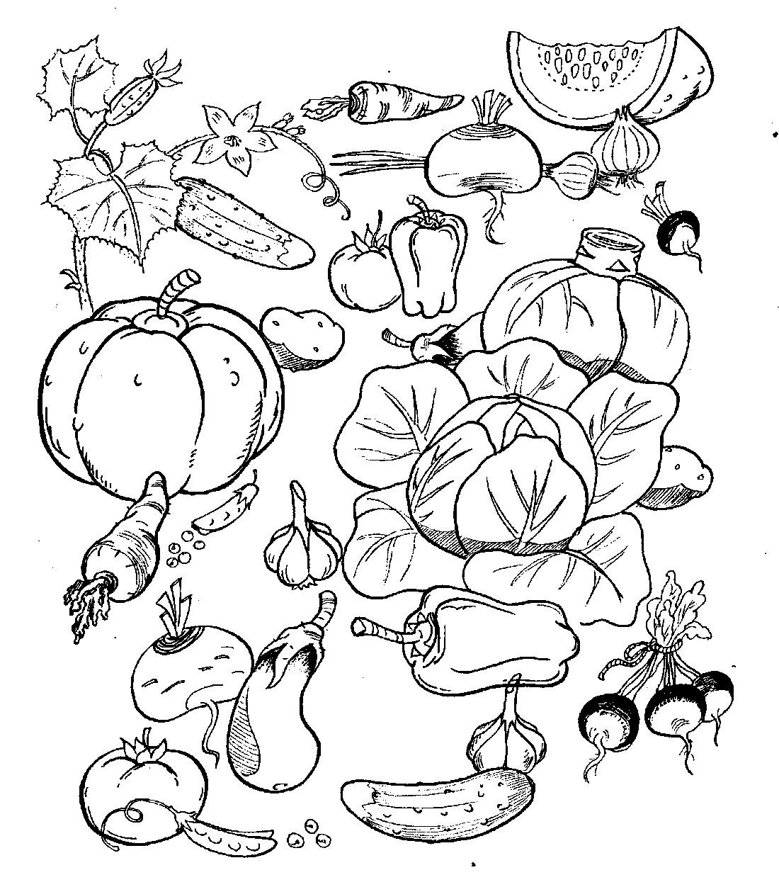 Раскраска овощи | andrey-eltsov.ru