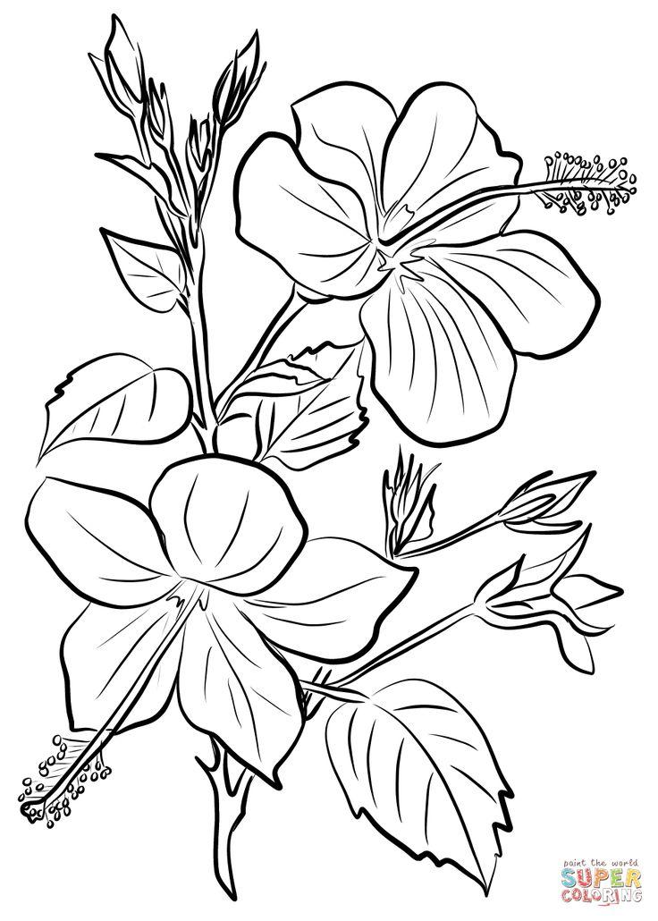 Гибискус рисунок 5