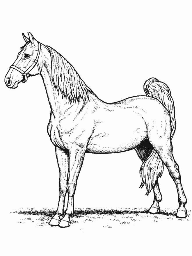 Раскраска конь 67