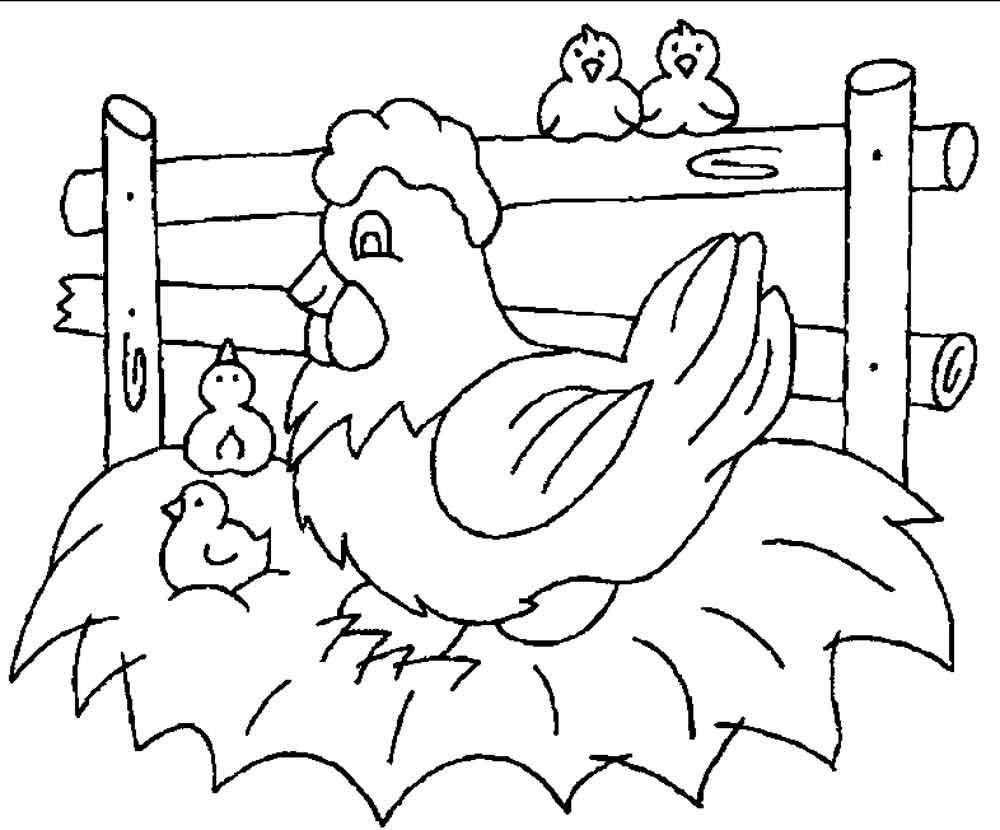 Раскраска курица 17