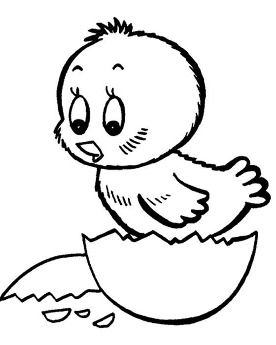 раскраска цыплёнок 7