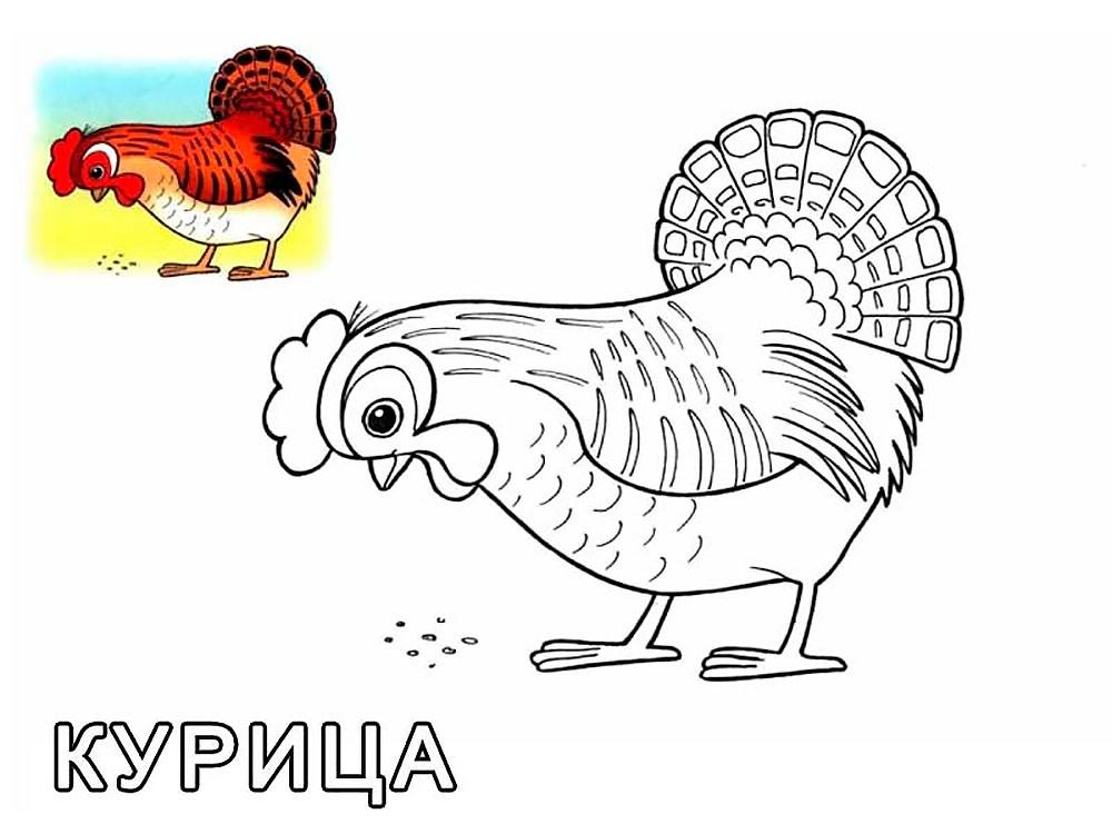 раскраска курица 32