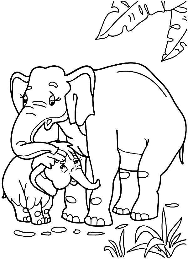 Раскраска слон и слонёнок