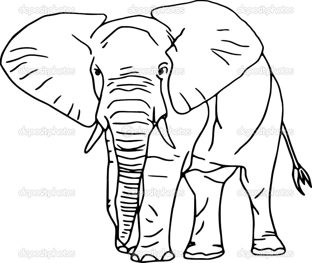 слон крупным планом