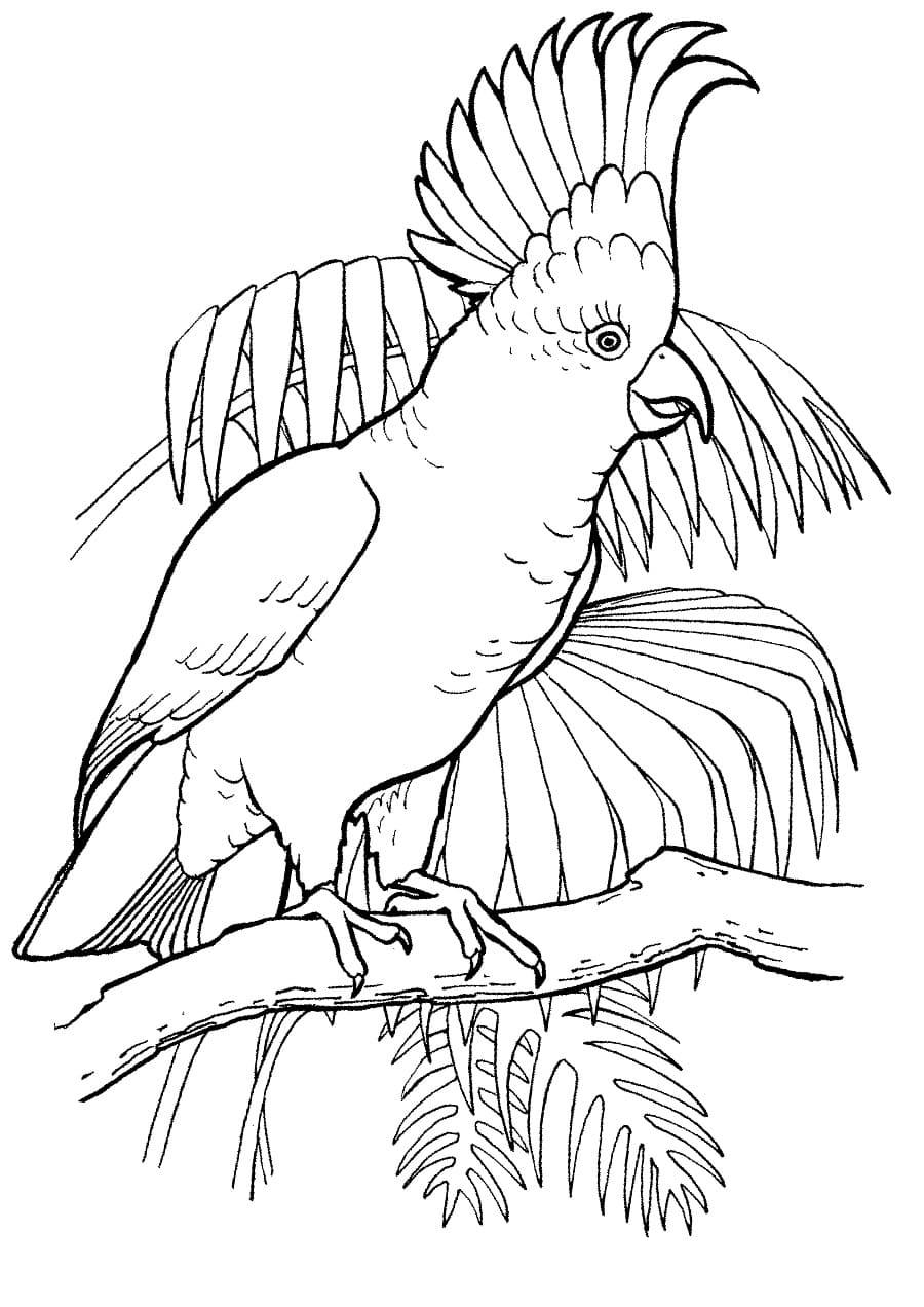 Раскраска попугай 11
