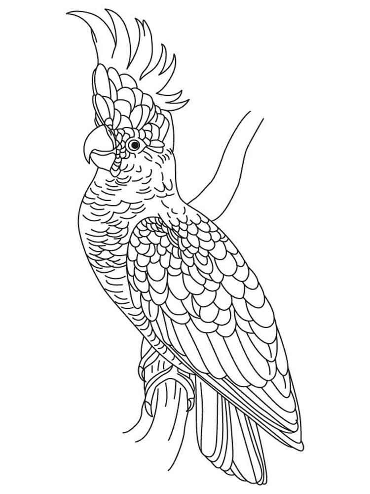 Раскраска попугай Какаду 4