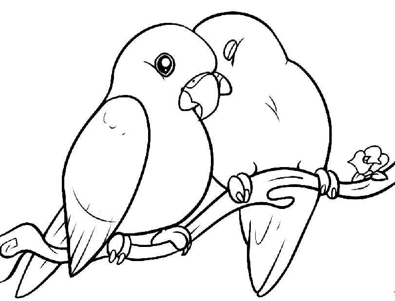 раскраска попугаи 2