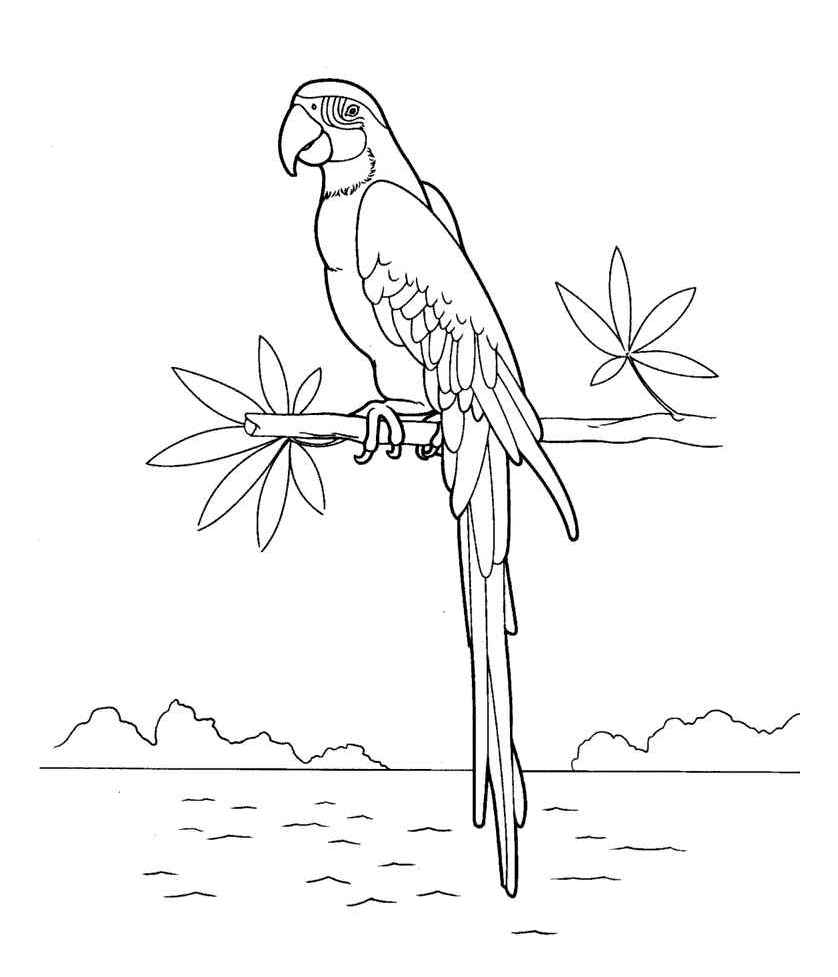 попугай Ара фото 7