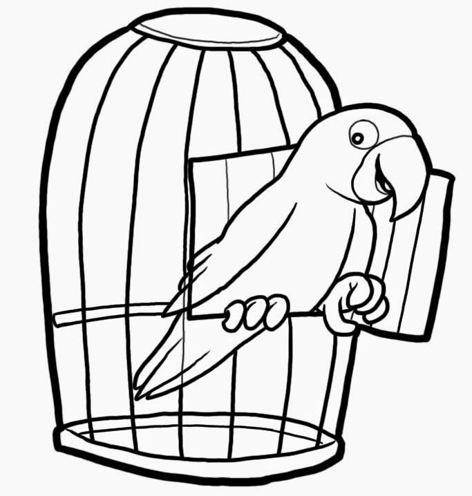 раскраска попугай 9