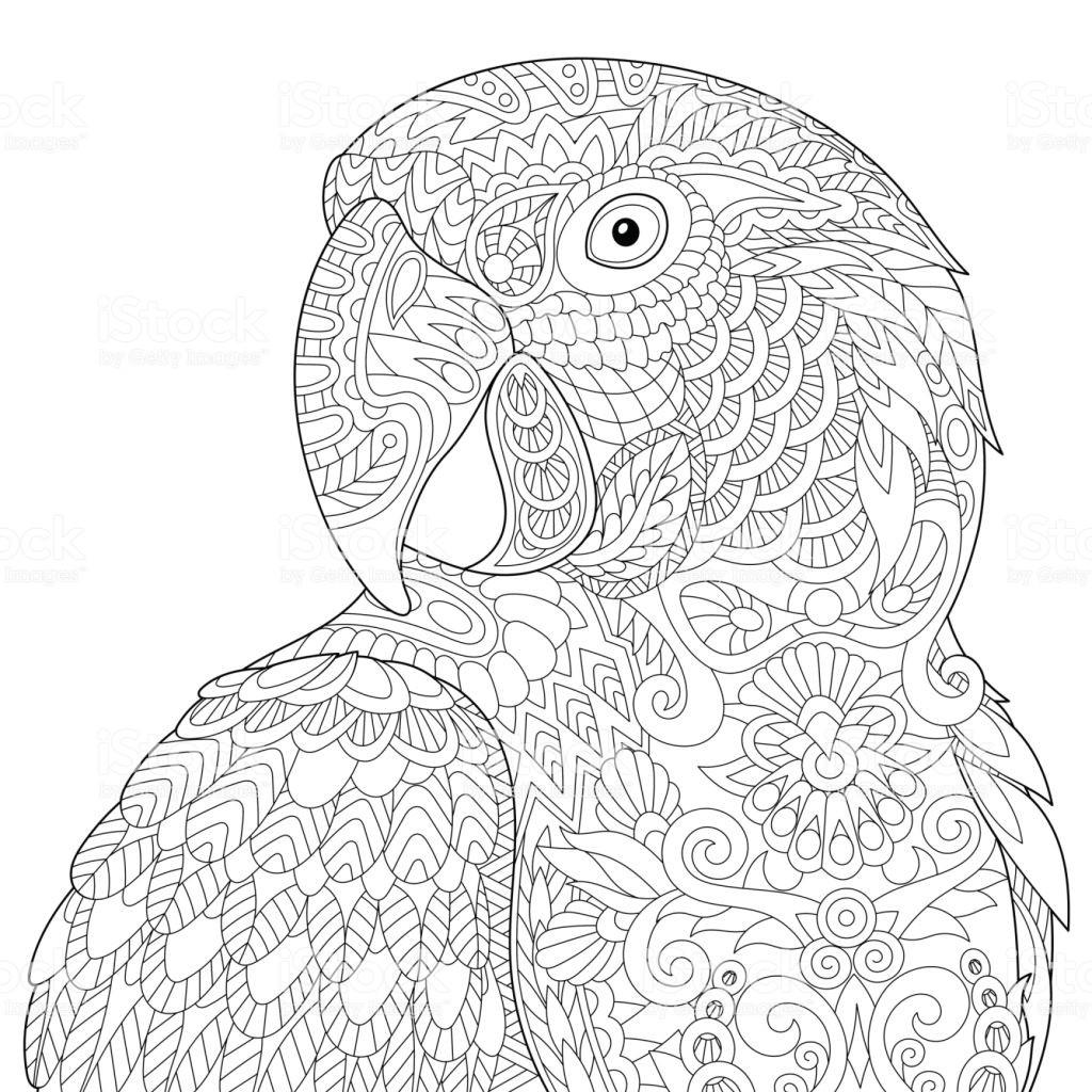 раскраска попугай антистресс 17