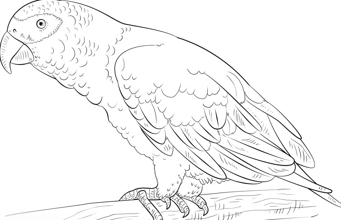 раскраска попугай 6