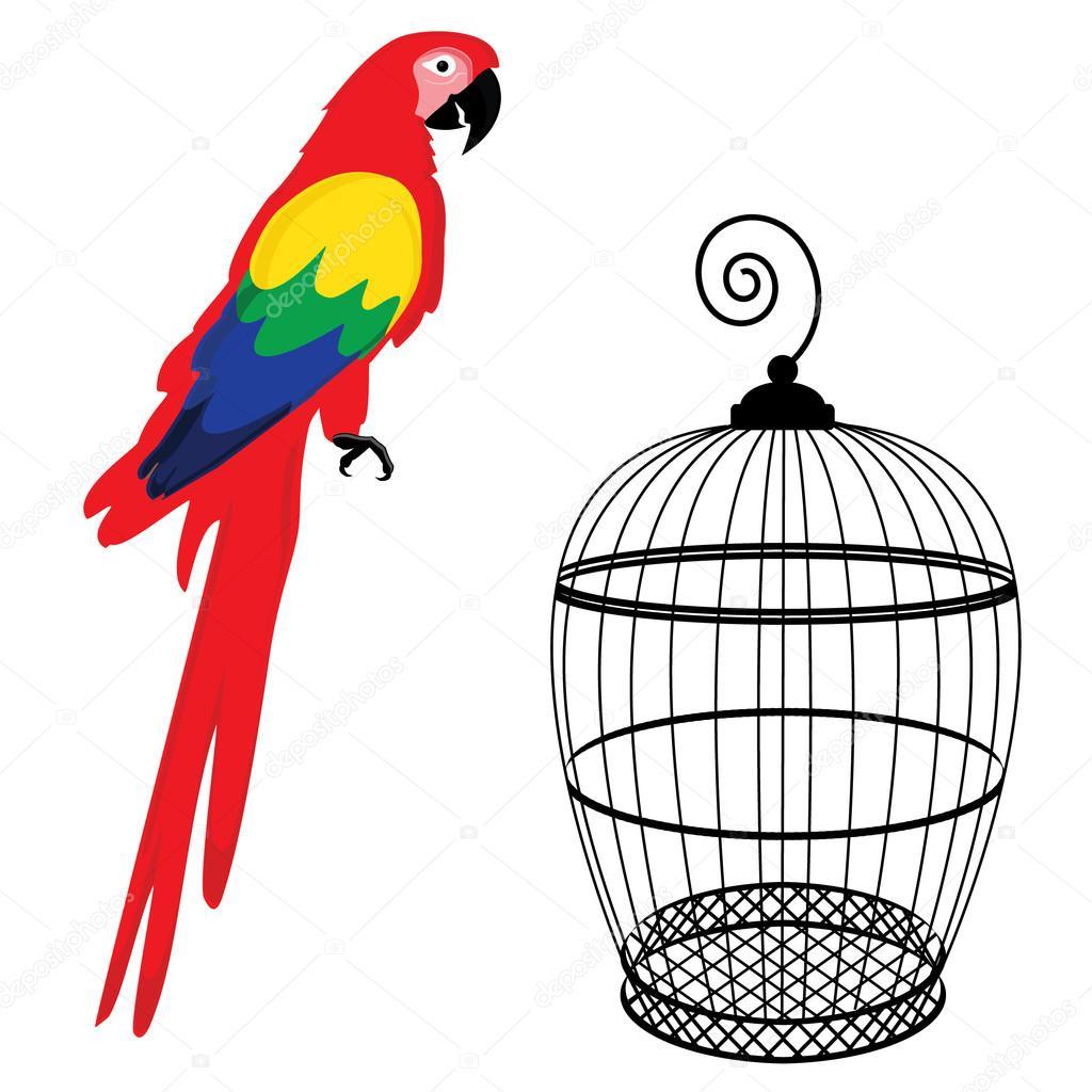 раскраска попугай 31