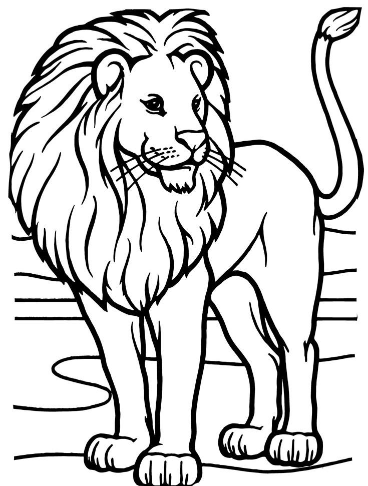 красивый лев 4