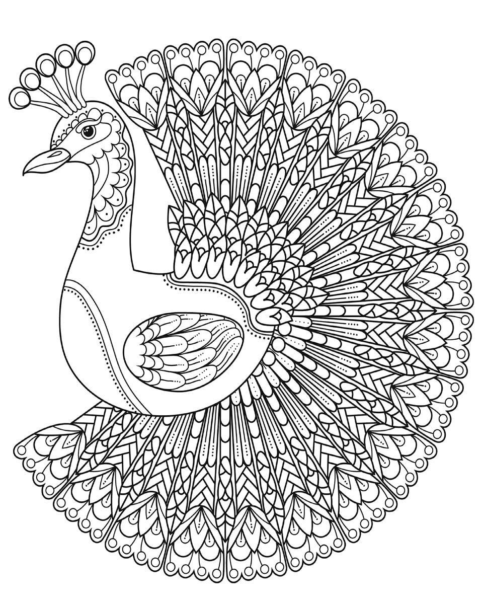 Раскраска павлин 46