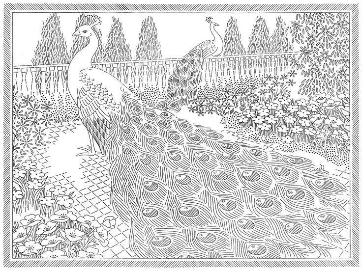Раскраска павлины 2