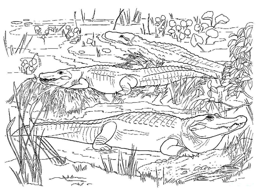 болото с крокодилами фото