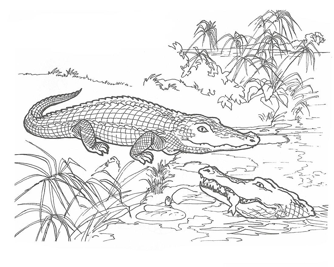 крокодилы в озере