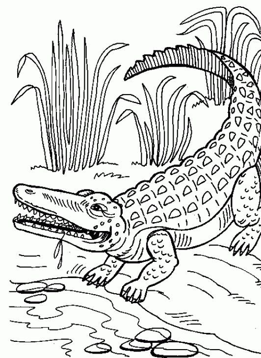 Раскраска крокодил 22