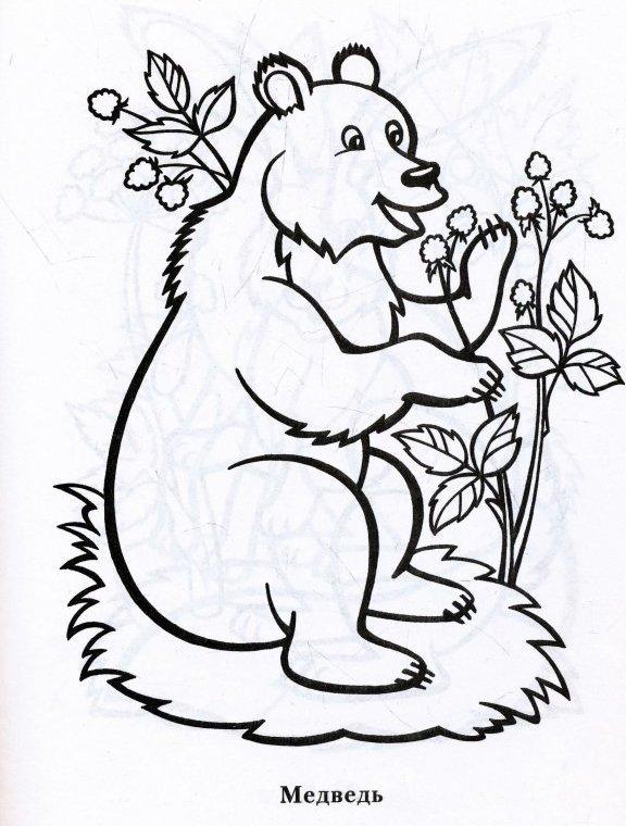 Медведь малину ест