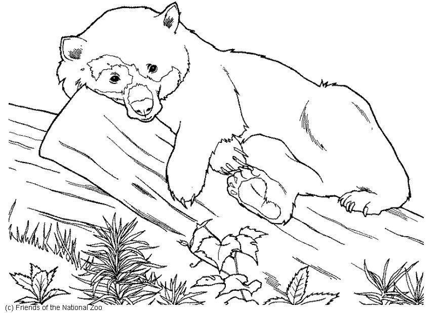 медведь лежит